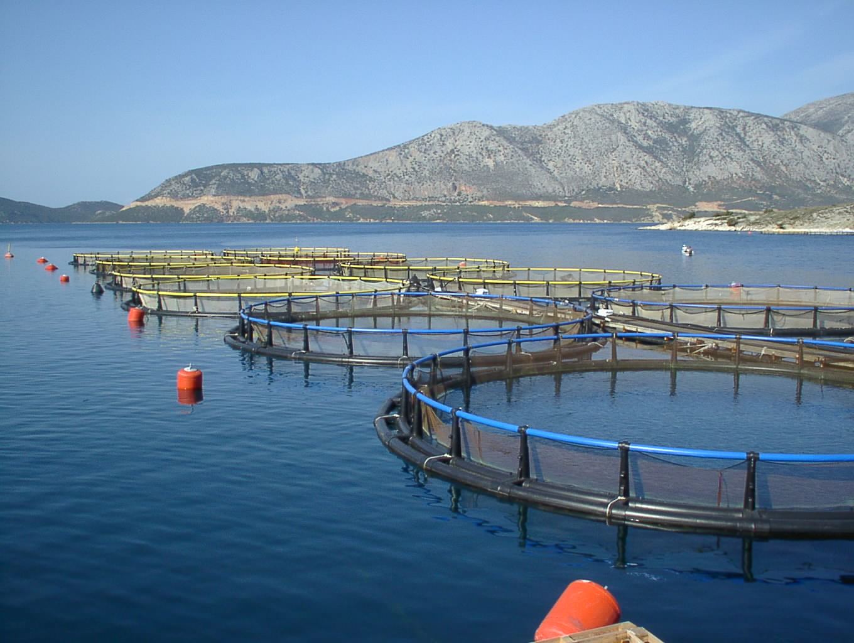 Εγκριση 112 επενδυτικών έργων από τα Μέτρα 3.2.2 και 4.2.4 «Παραγωγικές επενδύσεις στην Υδατοκαλλιέργεια» του Επιχειρησιακού Προγράμματος Αλιείας και Θάλασσας (ΕΠΑλΘ) 2014-2020